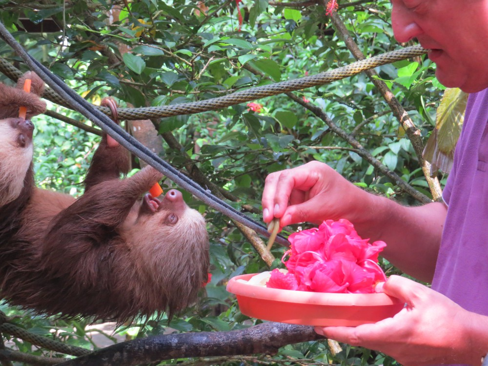 Episode 4_Costa Rica to Panama Picture Shows: Stephen feeding baby sloth at Jaguar Rescue Centre, Puerto Viejo, Costa Rica